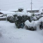 雪が降る地域に移住して必須だったアイテムを紹介する。
