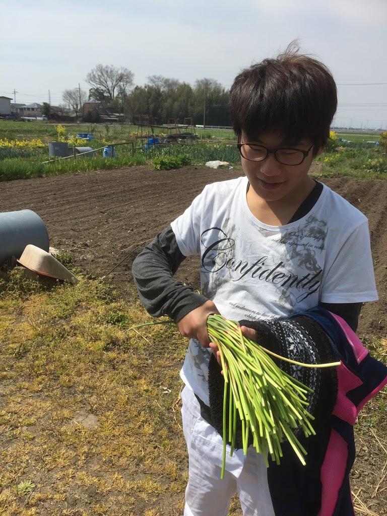 シェア畑 収穫