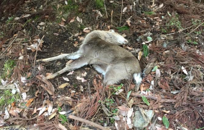 初めて銃で鹿を殺した時の心境を振り返る